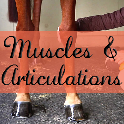 Soins des Muscles & Articulations