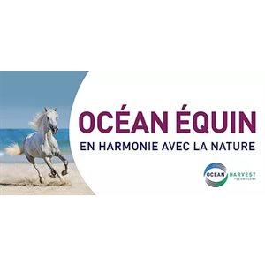 Lozana Ocean Equine